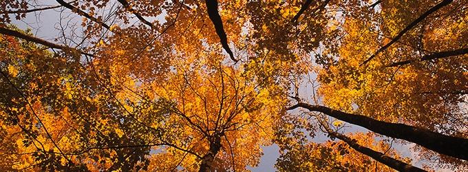 automne au canada
