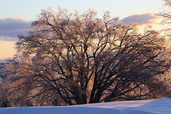 paysage hiver québec
