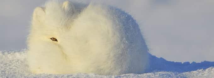 adaptation des animaux a l'hiver canadien