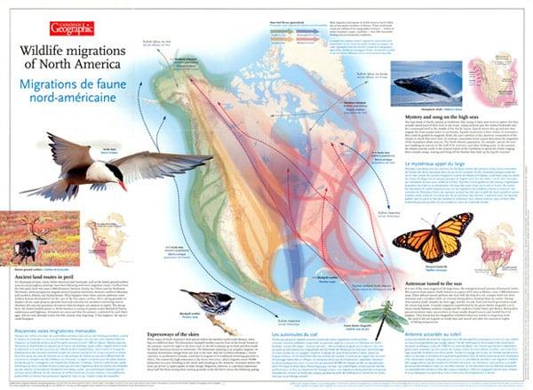 carte migration au canada