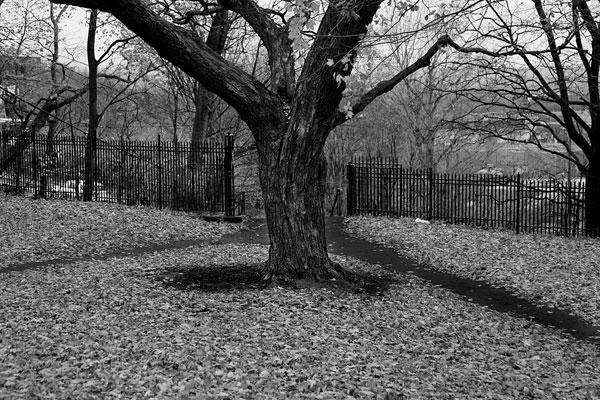 photo noir et blanc automne