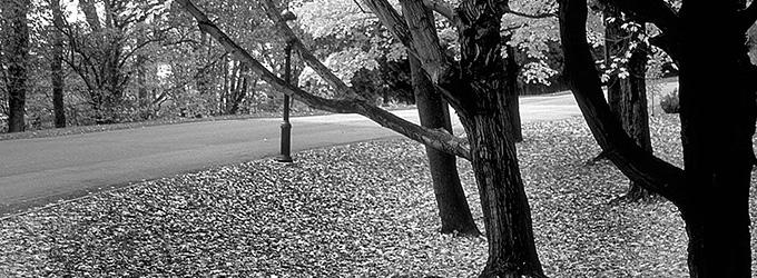 automne quebec noir et blanc