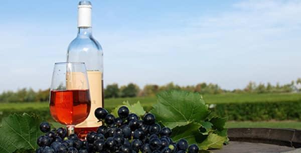 Route des vins Estrie