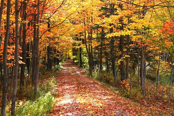 automne beauce