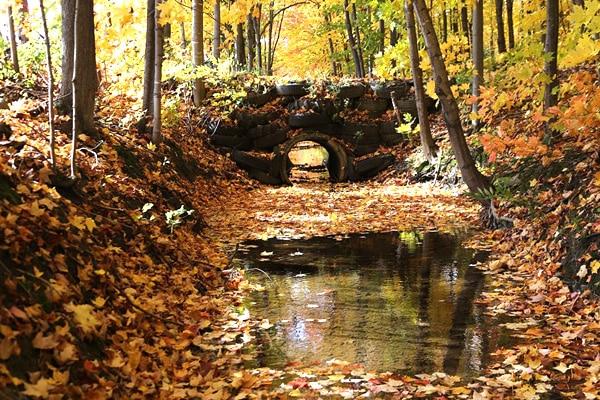 ruisseau automne quebec