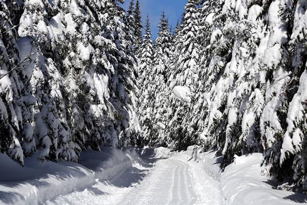 foret neige quebec