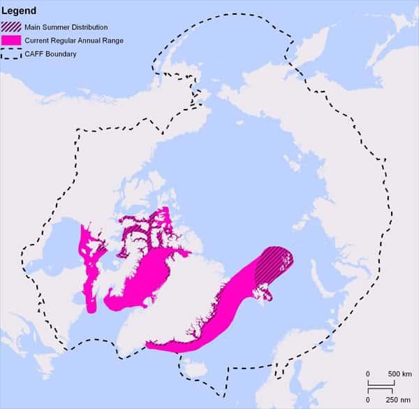 habitat du narval