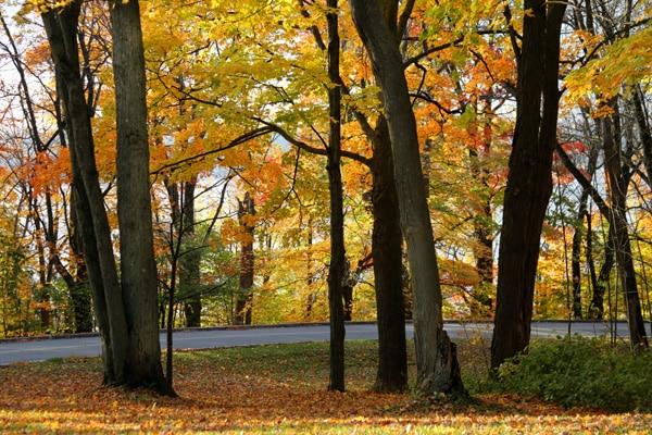 couleur automne canada