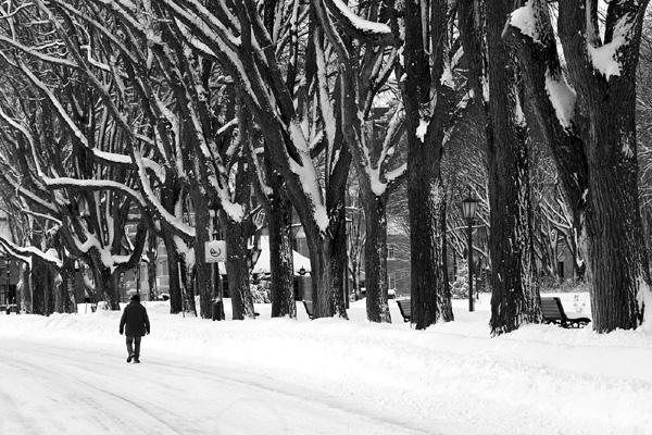 plaines d'Abraham en hiver