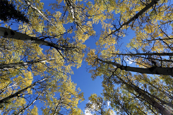 photographie grand-angle automne