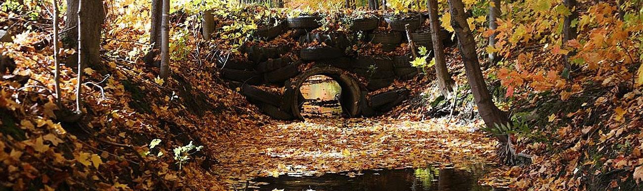 ruisseau automne